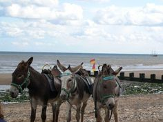 Donkeys on the beach, click the link to find out what happened with them