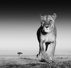 We love these majestic creatures. BelAfrique your personal travel planner - www.BelAfrique.com