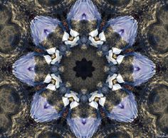 Reflection Kaleidoscope photograph by Jordan Blackstone #fineartphotography #kaleidoscope #jordanblackstone