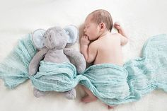 newborn, baby, boy, elephant, blue, sleeping, friends