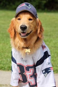 #Patriots Pup  I have received the product(s) complimentary to test and/or review. #NFLfanstyle #contest