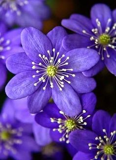 violet flowers wedding, home decor garden, small types of purple flower names plants pictures of dark light royal flowers Small Purple Flowers, Exotic Flowers, Amazing Flowers, Beautiful Flowers, Beautiful Gorgeous, Purple Flower Photos, Flower Pictures, Absolutely Gorgeous, Beautiful Pictures