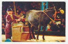 Donkey & clown Circus Act, Moscon, Russia, Circus, 1950- - bidStart (item 32926052 in Postcards... Russia)