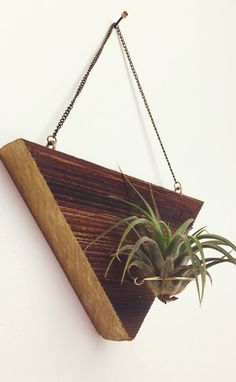 Reclaimed Wood Air Plant Holder by cedergoods on Etsy