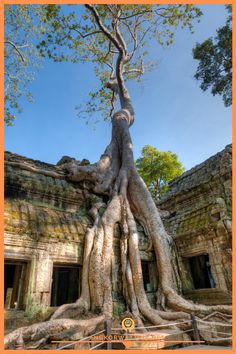 Jungle overtakes the ancient temple Ta Prohm near Siem Reap, Cambodia Ta Prohm, Angkor Wat Cambodia, Cambodia Travel, Siem Reap, How Beautiful, Travel Tips, World, Trees, Photography