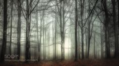 Morning magic - Pinned by Mak Khalaf Thank you so much for your visit! Nature treesleaveslandscapefogforestcolorcoldlightswedenmarsmagicalbeech forestNaturemarkarydebenhart by goran7