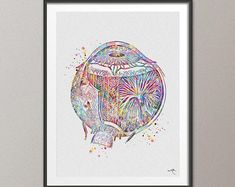 Medical Art Link 57 New Ideas Eye Anatomy, Anatomy Art, Free Prints, Prints For Sale, Nerd, Mat Paper, Medical Art, Human Eye, Science Art
