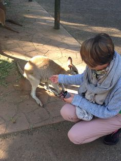 Me feeding wallabies at Featherdale Wildlife Park