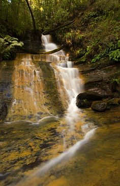 Lower Golden Cascade  Big Basin Redwood State Park.I want to go see this place one day.Please check out my website thanks. www.photopix.co.nz