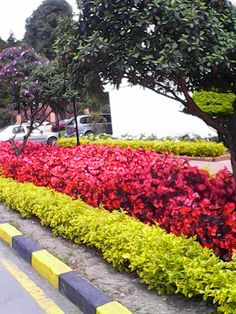 Sidewalk, Collection, Colombia, Side Walkway, Walkway, Walkways, Pavement