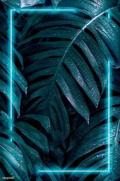 Whats Wallpaper, Iphone Wallpaper Photos, Neon Light Wallpaper, Framed Wallpaper, Flower Background Wallpaper, Flower Phone Wallpaper, Dark Wallpaper, Colorful Wallpaper, Aesthetic Iphone Wallpaper