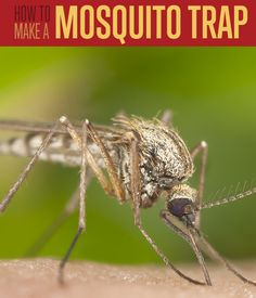 DIY Mosquito Trap | Learn how to make this simple mosquito trap out of cut bottles. #DiyReady www.diyready.com