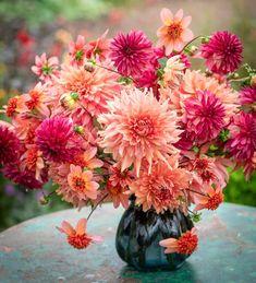 Buy William Morris Dahlia Collection from Sarah Raven: Includes Dahlia 'Totally Tangerine', 'Labyrinth' & 'Bacardi'. An unbeatable combination. Rare Flowers, Bulb Flowers, Yellow Flowers, Beautiful Flowers, William Morris, Ikebana, Growing Dahlias, Pot Plante, Dahlia Flower