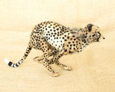 RESERVED FOR Marque Kasi the Cheetah and Luke by TheWoolenWagon