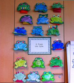Great Frog Life Cycle Activity!