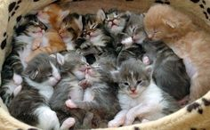Cute Overload : basket o' kittens