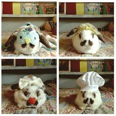 Bitsy the bunny in Blabla Halloween costumes!  via Kristin Rogers