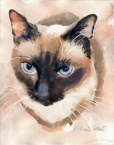 Print Applehead Siamese Cat Art Print of a by rachelsstudio #animalart #cat #catart