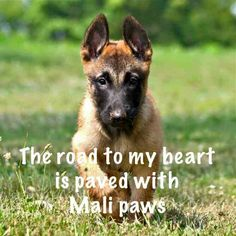 The road to my heart is paved with Mali paws