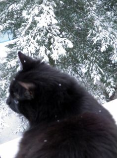 OMG! It´s Cold outside! Cool Photos, My Photos, Finland, I Am Awesome, The Outsiders, Cold, Fun, Photography, Animals