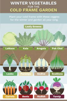 Cold Weather Vegetable Growing #vegetable_gardening