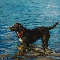 Karin Jurick, reminds me of a dog I know very well, a border-shepherd mix