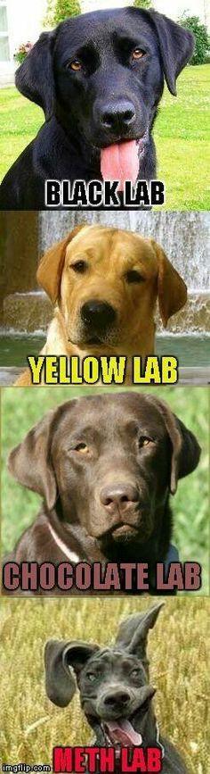 Meth lab  Chocolate lab
