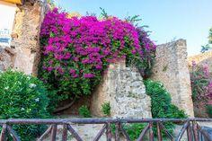 Griechenland, Chania, Kreta traditionelle Bild Stra�e photo