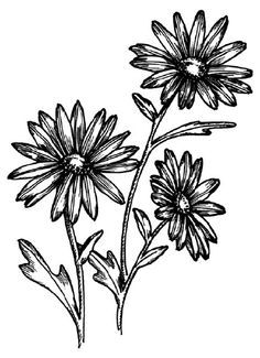 Daisy Drawing on Pinterest | Nature Drawing, Simple Doodles and Easy …