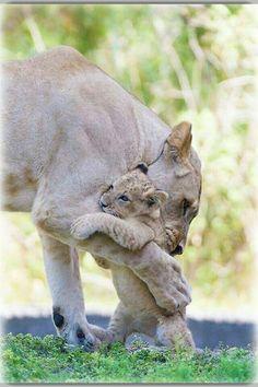 Mãe amor maior.