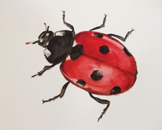 Ladybird Illustration Giclée Print Nursery Wall Art - Prints and Posters Home Decor Wall Art, Nursery Wall Art, Watercolor Illustration, Watercolor Art, Bug Art, Landscape Prints, Wildlife Art, A5, Wall Art Prints