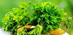 A legjobb természetes szerek a szúnyog és bogár csípések esetére | Receptneked.hu (olcso-receptek.hu) Pune, Parsley Tea, Anti Inflammatory Herbs, Cancer Fighting Foods, Body Detox, Herbal Remedies, Smoothie Recipes, Pesto, Herbalism