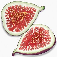Food Illustration: Figs By Amanda Dilworth