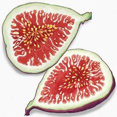 Food Illustration: Figs By Amanda Dilworth