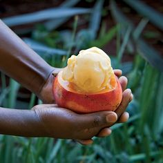 Fresh Mango Sorbet  Inspired by the ripe mangoes at a farmers' market along the drive to Mount Kenya Safari Club, Hubert Des Marais came up with this smooth and creamy frozen dessert. Its intensely tropical kick comes from a coconut-milk base infused with ginger and cardamom. Food & Wine