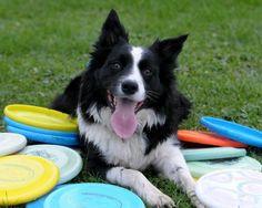 Disk Dog