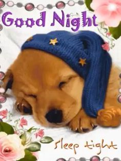 Sleep tight tonight with this good night ecard. Free online Good Night And Sleep Tight Ecard ecards on Everyday Cards Funny Good Night Quotes, Funny Good Morning Messages, Good Night Messages, Funny Good Night Pictures, Good Night Prayer, Good Night Blessings, Good Night Gif, Good Night Greetings, Good Night Wishes