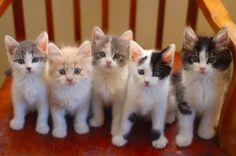 cute foster kittens