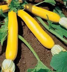 20+ Golden Zucchini Summer Squash Seeds, $0.99