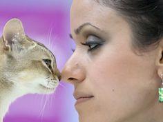 uns mostram mais delicadeza do que outros na competição de beleza felina (Foto: Vadim Ghirda / AP)