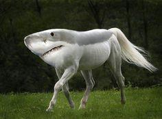een paard met een haai