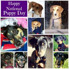 Happy #NationalPuppyDay - check out some of our ways to celebrate! ©LapdogCreations