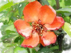quince flower, via Flickr.