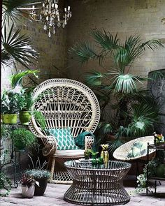 Oasis #love #greenery #oasis #indoors #inspo #vintage #cane #thegypsynook