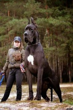 A Dog Bigger Than Their Owner!
