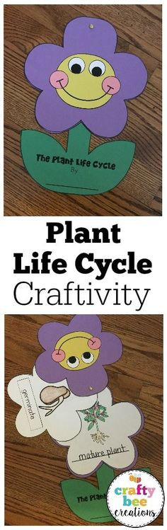This is a great life cycle craft for kids learning the different stages of the plant life cycle.