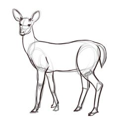 How to Draw a Deer (with Pictures) - wikiHow