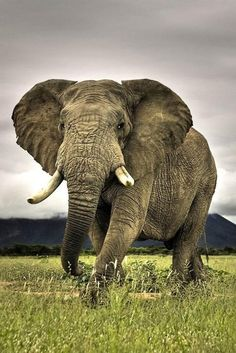One of The World`s Most Beautiful Animals