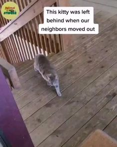Funny Animal Videos, Cute Funny Animals, Cute Baby Animals, Animals And Pets, Cute Cats, Cute Kitten Gif, Kittens Cutest, Cats And Kittens, Feel Good Stories