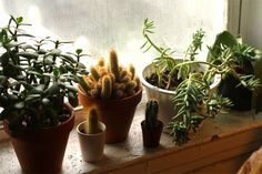 Adorable little plants. One of my new year's resolutions was to start a terrarium collection, but after seeing this I think I'll also include small cacti :)